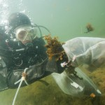 Marine and freshwater environmental surveys